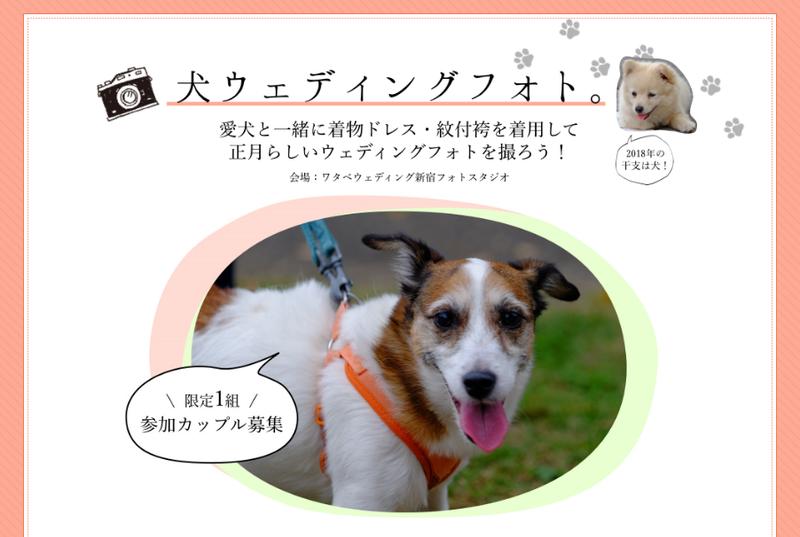 犬フォト.png